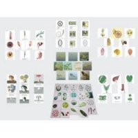 China The set of teaching cards for animal and plant breeding on sale