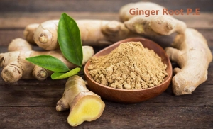 China Ginger Root Extract 10% Gingerols HPLC on sale