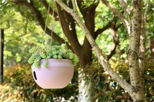 China Plastic Flower Pot Garden Hanging Living Wall Planter on sale