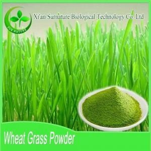 China Fruit&Vegetable Extract Wheat Grass Powder on sale