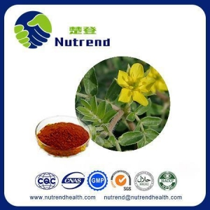 China Standard Herb Extract Natural Tribulus Terrestris Extract on sale