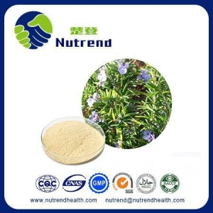 China Standard Herb Extract Rosemary Extract on sale