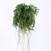 China Plastic Hanging Fern Plants on sale