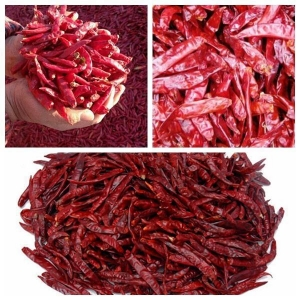 China Chillis New Crop Hot Red Chilli on sale