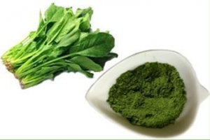 China Organic Fruit & Vegetable Powder Spinach powder on sale
