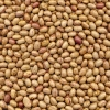 China Beans Light Speckled Kidney Bean(Round Shape) for sale