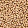 China Kernels Peanut Kernel(Baisha Type) for sale