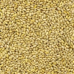 Quality Kernels Pinenut Kernel (Huashan Origin) for sale