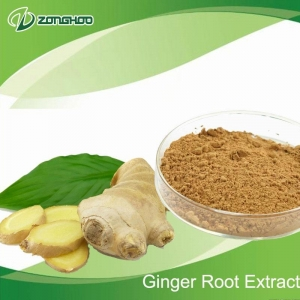 China Herbal Extract Ginger roots P. E. on sale