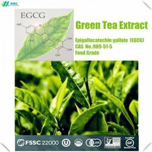 China Amino Acids And Vitamin P.E And Food Additive Green Tea Extract EGCG on sale