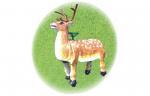 Bionic Animals Product name: Bionic deer