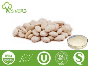 China Plant Extracts White Kidney Bean Extract - Phaseolin 1%, 2%; Alpha-Amylase Inhibitors on sale