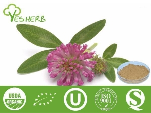 China Plant Extracts Red Clover Extract - Flavone 2.5%-40% on sale