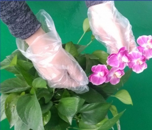 China Disposable pe glove Pe disposable factory on sale