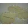 China TSA Agar Plate for sale