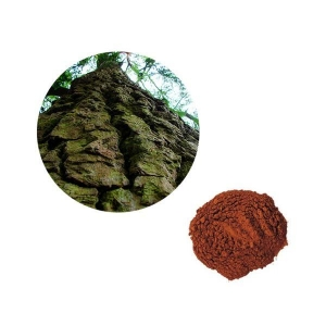 China herbal extract Pine Bark Extract on sale