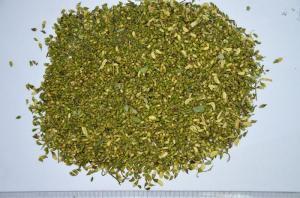 China Sophora Japonica on sale