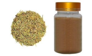 China Rosemary leaf extract on sale