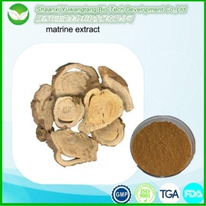 China Sophora Flavescens Extract on sale