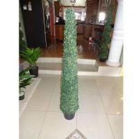 Slim spiral Topiary