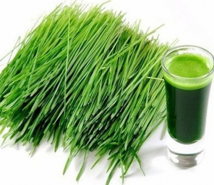 China Herbal Extract Barley Grass Powder on sale