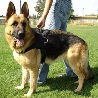Reflective Pet Harness(RPH 7012)