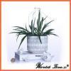 China factory price geometric cement basic garden decor flower pot for sale