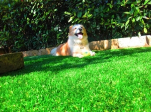 China Leisure Artificial Turf Professional Artificial Lawn Landscaping on sale