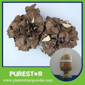 China Maitake (grifola frondosa) Extract / polysaccharides on sale