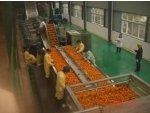 China Orange Juice Concentrate Processing Line on sale