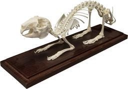 China Complete Catalog Domestic Rabbit Skeleton Articulated Skeleton on sale