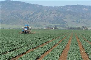 China Magnesium Hydroxide Fertilizer on sale