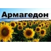 China The seed of sunflower hybrids under the Euro-philips lighting ukraine for sale