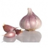 China Garlic for sale