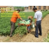 China Peanut harvester machine for sale