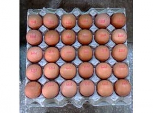 China The Exported Fresh Egg of Liaoning Dagu Chicken on sale