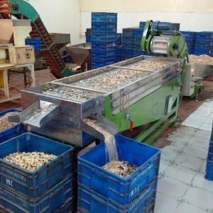 China Broken Cashew Kernel Sorting Machine on sale