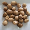 China Canning White Button Mushrooms with Extract Dishes Cultivation for sale