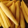 China All About Cans of Big Yellow Corn Kernels for Sale for sale