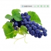 China Grape Seed Extract for sale
