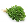 China Fenugreek Seed Extract for sale