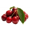 China Acerola Cherry Extract for sale