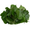 China Mulberry Leaf Extract for sale