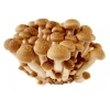 China Shiitake Mushroom Powder for sale