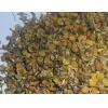 China HERBS & FLOWERS CHAMOMILE NO.MAHE004 for sale