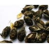 China GREEN TEA JASMINE PHOENIX EYES for sale