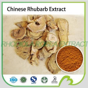 China Chinese natural herb plant extract Rhubarb root extr on sale