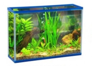 China YG-R16 Square Fish tank on sale