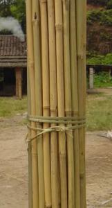 China Tonkin (Tea) Bamboo Canes on sale