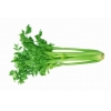 China Celery Juice Powder for sale